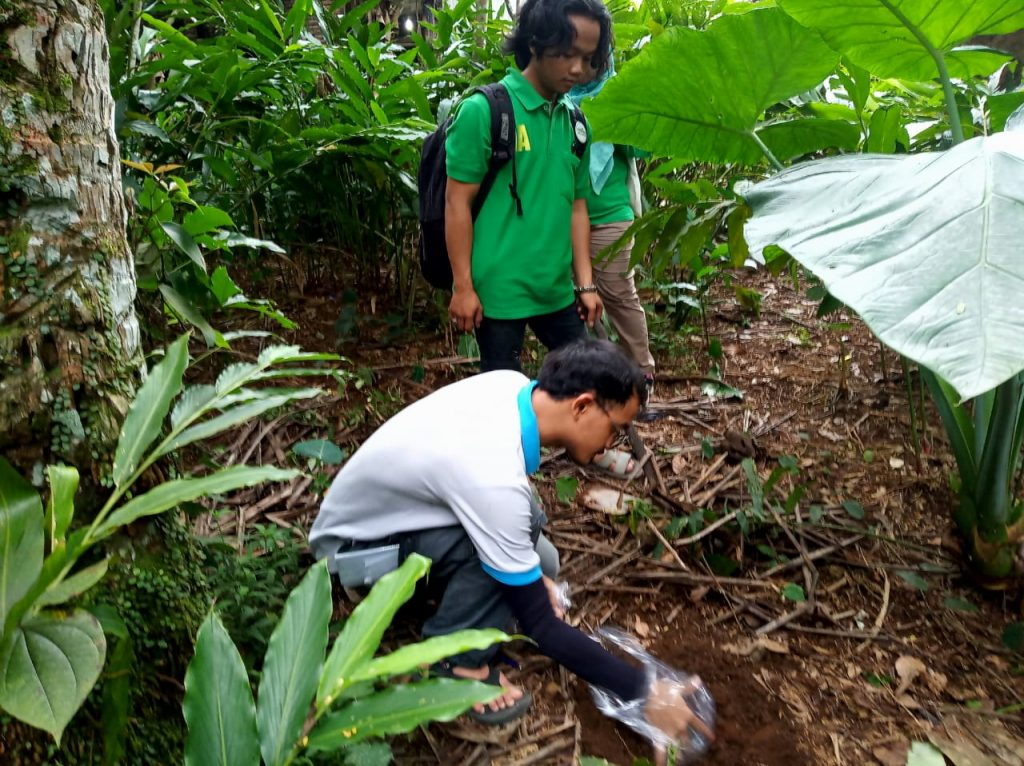 Organic Resertification Audit in PT. Indo Agroforestry